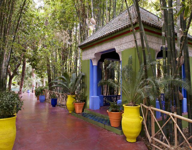 Les Potes, les Bambous, les palmiers au Jardin Majorelle